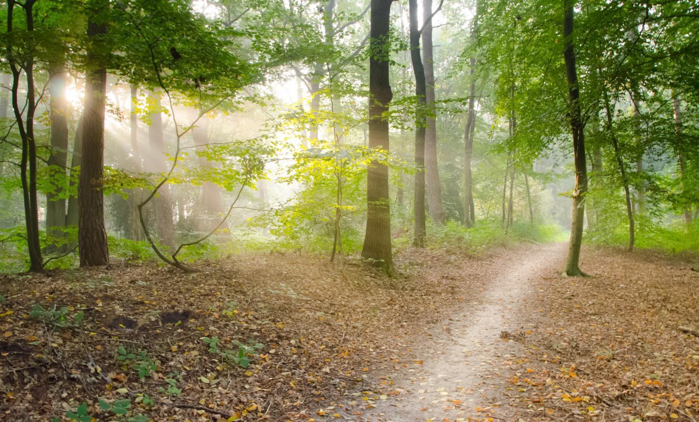 dry-leaves-forest-hd-wallpaper-41102.jpg